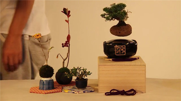 Hoshinchu-air-bonsai-hisheji (2)