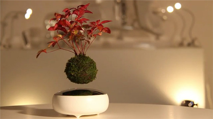 Hoshinchu-air-bonsai-hisheji (9)