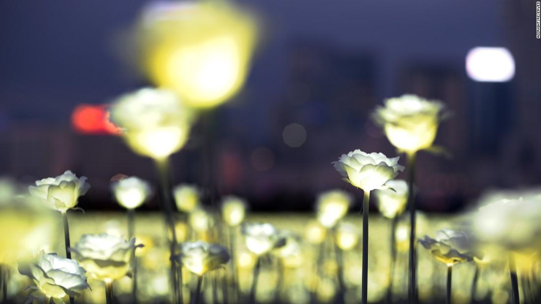 160215101735-02-hong-kong-light-rose-garden-0213-super-169