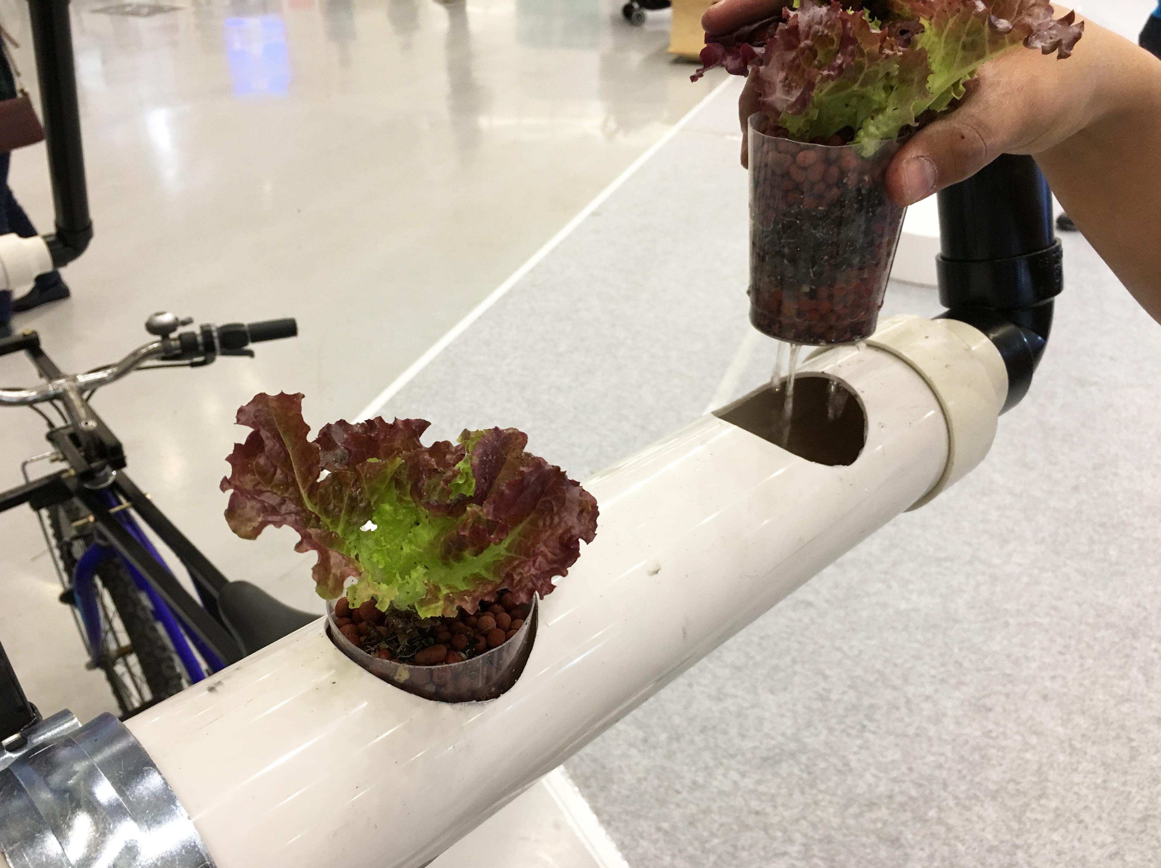 hydroponic farm1
