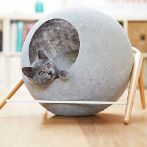 优雅舒适猫咪的家