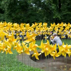 看,这个公园开满了风车花